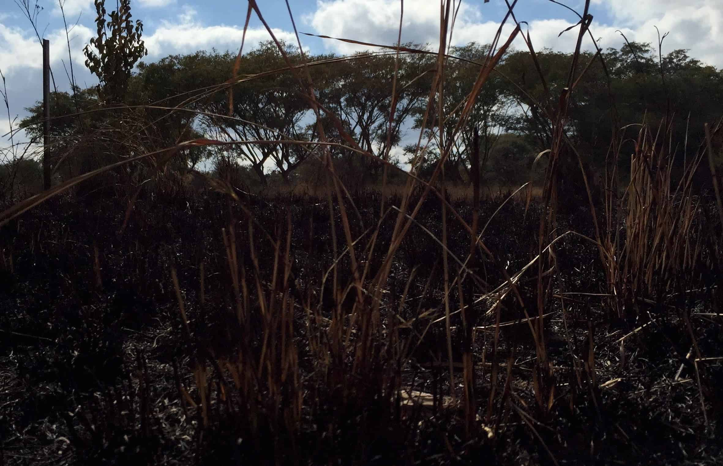 A Burned Field In Zimbabwe