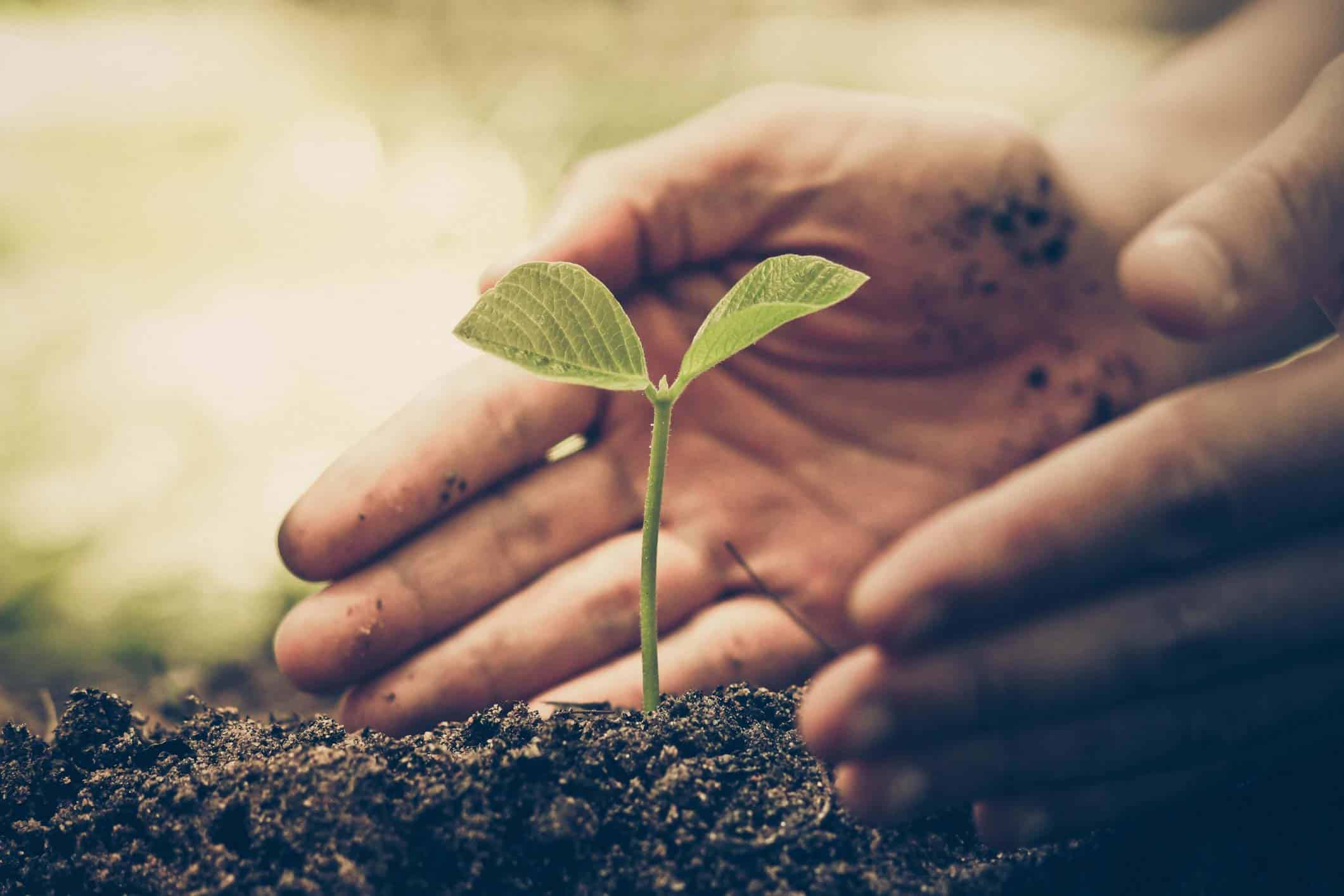Are You Really Ready to Grow? | Mekanic