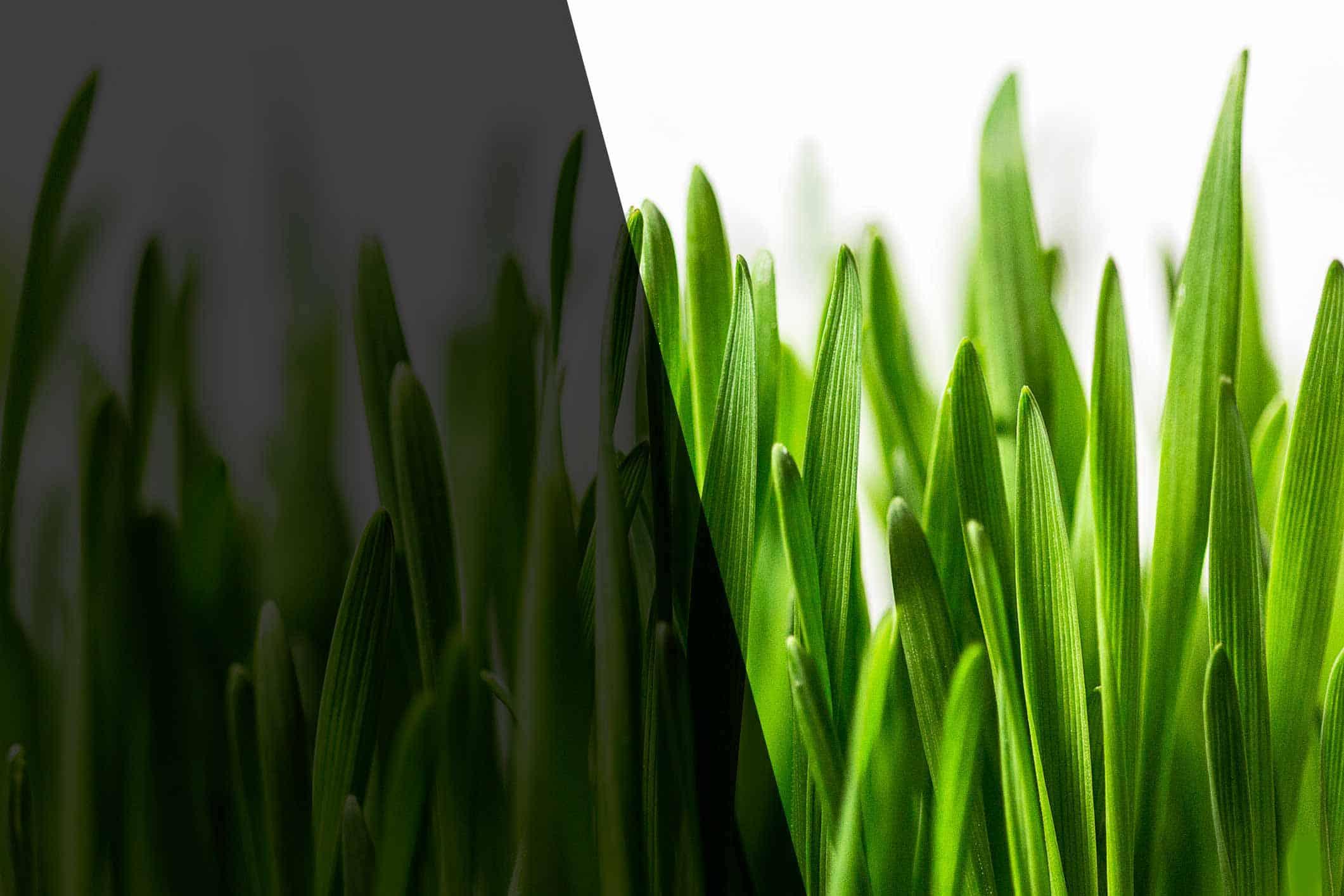 The Grass is Not Always Greener   Mekanic